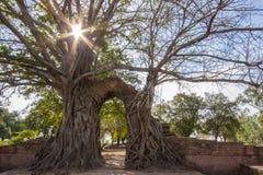 Passage de ` de miracle au ` de passage du temps aux ruines de Wat Phra NgamWat Cha Ram, Phra Nakorn Si Ayutthaya, Thaïlande Images stock