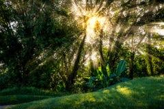 Passage de faisceau de Sun par la feuille verte Images stock