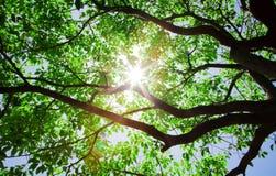 Passage de lumière du soleil par les arbres photo stock