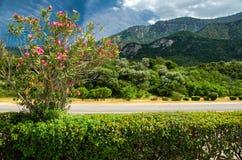 Passage de montagne de Thermopylae avec le buisson des fleurs, Grèce photographie stock libre de droits