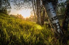 passage des rayons de l'ONU par la forêt Photos stock