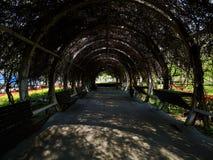 Passage die met wistariainstallatie worden behandeld royalty-vrije stock afbeeldingen