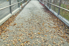 Passage with fallen leaves Royalty Free Stock Photography