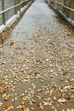 Passage with fallen yellow leaves Royalty Free Stock Photo