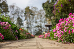 The passage and flowers royalty free stock photo