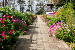 The passage and flowers royalty free stock photography