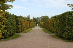 Passage inside Hedge Maze. View of a passage that comes through a hedge maze (inside Catherine Park of Saint Petersburg, Russia Stock Photo