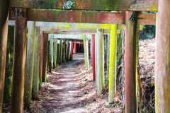 Passage of Japanese Torii gates Royalty Free Stock Photos