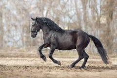 Passage noir de cheval photo stock