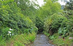 Passage of the river in the azores islands stock images