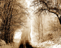 Passage through the snowy winter park Royalty Free Stock Images