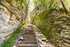 A passage in a stone labyrinth on the site of the fault after the earthquake. Sochi, the yew-boxwood grove. Sunny day Royalty Free Stock Photo