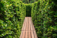 Passage through tree hedge Royalty Free Stock Images