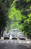 Passage of trees on road in Sao Paolo Royalty Free Stock Images