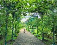 passagem Árvore-alinhada com a bicicleta no parque Imagens de Stock Royalty Free