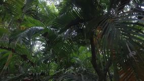 Passagem através da selva video estoque