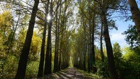 Passagem através do parque do outono vídeos de arquivo