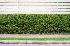 Passagem com fundo decorado da árvore Fotografia de Stock