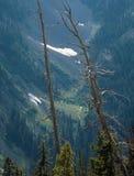 Passagem da cookie de fortuna, floresta nacional de Okanogan-Wenatchee, escala da cascata, Washington foto de stock royalty free