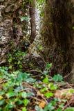 Passagem da selva fotografia de stock royalty free