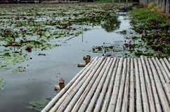 Passagem de bambu na lagoa Foto de Stock