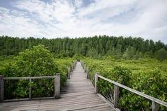 Passagem de madeira da floresta dos manguezais da ponte Imagens de Stock Royalty Free