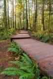 Passagem de madeira da fuga de caminhada em Lynn Canyon Park em Vancôver BC Canadá fotografia de stock