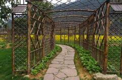 Passagem de madeira no campo verde e amarelo Imagens de Stock
