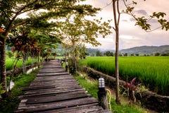 Passagem de madeira para ver o campo Terraced verde do arroz no la noi dos mae foto de stock royalty free