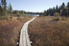 Passagem de madeira que conduz ao lago pequeno da truta em Minnesota do norte imagens de stock