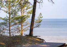 Passagem de madeira que conduz ao mar atrav?s de uma floresta do pinho fotos de stock
