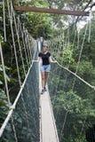 Passagem do dossel Parque nacional de Taman Negara fotografia de stock royalty free