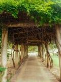 Passagem do túnel do jardim Foto de Stock