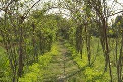 Passagem do trajeto da árvore Foto de Stock