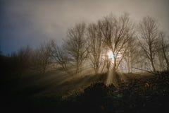Passagem dos raios de Sun através da névoa Fotos de Stock