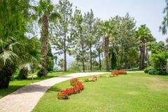 Passagem em um parque bonito com palmas Foto de Stock
