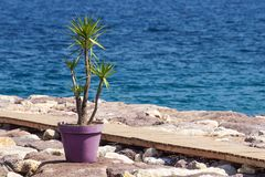 Passagem na doca rochosa perto do mar com uma planta em um frasco para a decoração foto de stock