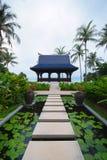 Passagem na lagoa completamente de lírios de água no jardim tropical. Fotografia de Stock Royalty Free