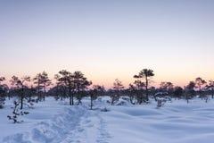 Passagem na neve profunda em um pântano no inverno fotografia de stock