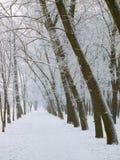 Passagem no inverno Fotografia de Stock Royalty Free