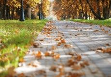 Passagem no parque do outono fotos de stock royalty free