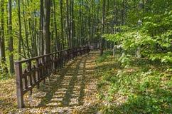 Passagem no parque do outono Imagem de Stock
