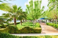 Passagem no parque do verão com palmeiras Imagens de Stock Royalty Free