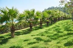 Passagem no parque do verão com palmeiras Foto de Stock Royalty Free