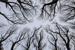 Passagem nos ramos de árvore do céu Fotografia de Stock Royalty Free