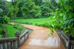 Passagem ou passeio de madeira com as folhas do verde cercadas com arbusto e plantas Imagem de Stock Royalty Free