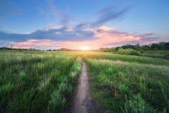 Passagem surpreendente através do campo de grama no por do sol Imagem de Stock Royalty Free