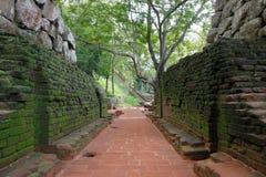 Passagen till lejon vaggar i Sigiriya som ridas ut och som är fullvuxen med mossa arkivbild