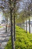 Passagens alinhadas árvore fotos de stock royalty free