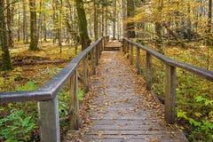 Passagens da floresta do outono de Bialowieza do Polônia imagem de stock royalty free